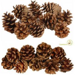 250 g Pigne naturali secche stabilizzate per addobbi da 3,5 a 6 cm